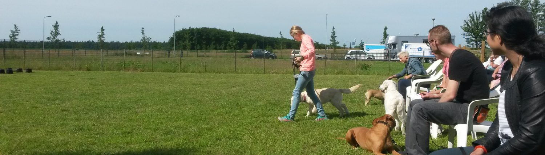 Dierenverzorging Drenthe